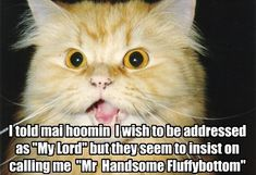 It Appears We Are at an Impass - LOLcats is the best place to find and submit funny cat memes and other silly cat materials to share with the world. We find the funny cats that make you LOL so that you don't have to. Cat Jokes, Funny Cat Memes, Funny Cat Videos, Funny Cats, Funny Animals, Pretty Cats, Beautiful Cats, I Love Cats, Cute Cats