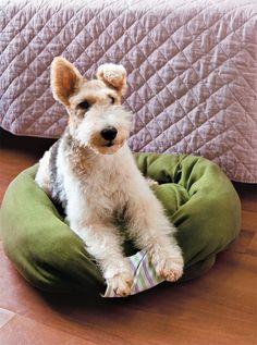Dog bed DIY - Uma caminha pra cachorro feita de moletom velho <3