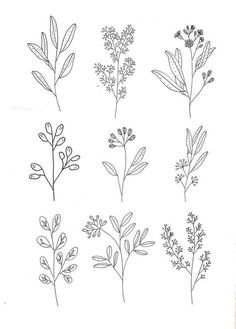 Beautiful sketches of wildflowers