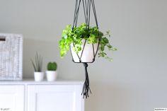 viherkasvit,vihreä,kukkaruukku,amppeli,olohuone