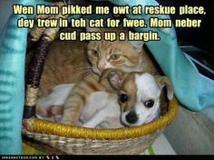 Wen Mom pikked me owt at reskue place, dey trew in teh cat for fwee. Mom nebber cud pass up a bargin.