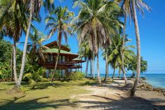Vacation in Costa Rica - Howler International Magazine - The Howler Magazine Tropical Beach Houses, Living In Costa Rica, Coconut Palm Tree, Apex Predator, Costa Rica Travel, Central America, Palm Trees, Caribbean, Stock Photos