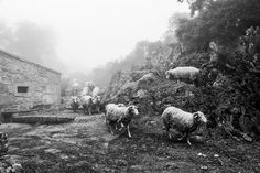 THE FLOCK AND FOG  - A_DOURO