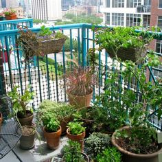 exteriors nice decoration for balcony plant design green bamboo pertaining to plant decoration in balcony Tips to Growing Fresh Herbs on the Balcony