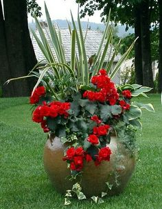 Container Gardening Gallery - Seasonal Color for Commercial Landscape - Signature Landscape Services Outdoor Flowers, Outdoor Plants, Potted Plants, Container Flowers, Container Plants, Container Gardening, Beautiful Gardens, Beautiful Flowers, Pot Jardin