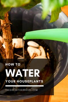 Never over- or under-water your houseplants again! Find out some top tips of how to water your houseplants! How to Water Indoor Plants | How to Water Houseplants | How Much Do I Water my Plant | Pothos Watering | How to Water my Pothos | How to Water Fiddle Leaf Fig | How to Water Dracaena | How to Water Succulents | House Plants Decor, Plant Decor, How To Water Succulents, All About Plants, Apartment Plants, Low Light Plants, Best Indoor Plants, Fiddle Leaf, Bedroom Plants