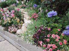いつも花が咲いている、きれいな花壇に憧れるけれど、キープするにはお手入れが大変そうとか、枯らさずに育てられるかしらなど、初めてのガーデニングには不安がいっぱいだと思います。そんなお悩みを軽くしてくれるプロのアドバイスをご紹介。アドバイザーは、愛知・豊田市で一年中、花が絶えないガーデンをつくる「花遊庭」のガーデナー、天野麻里絵さん。小さな花壇づくりの基本と、5つのオススメ草花をピックアップしてご紹介します。 Garden Items, Garden Shop, Autumn Garden, Green Garden, Flower Beds, Flower Art, Garden Paths, Garden Landscaping, Perfect Plants