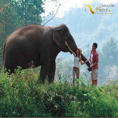 در #تایلند ماهعسل متفاوتی را تجربه کنید. طبیعت بکر را از نزدیک لمس کنید. مهربانی حیوانات را حس کنید.  #ماه_عسل #عشق #سفر_به_تایلند #گردشگری #سفر #تابستان #تخفیف #دوستی #عروسی #نامزدی  #Tourism #Travel #TAT #TATIran #honeymoon #enjoy #engaged #animal #elephant #thailandtourism #Thailand #adventure
