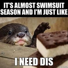 Lessons learned from the otter meme Funny Shit, Funny Cute, The Funny, Funny Memes, Hilarious, Memes Humor, Animal Memes, Funny Animals, Cute Animals