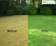 Before and after a Lawnscience regeneration treatment.