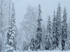 Some days are white days in my Lapland!