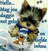 Lekker daggie Lekker Dag, Goeie More, Good Morning Wishes, Afrikaans, Disney Films, Animal Memes, Chihuahua, Teddy Bear, Toys