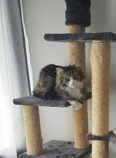 Vi mangler vores elskede kat Findus.