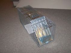 #Homestead #Rabbits - Box Traps and Rabbit Farming for the Prepper