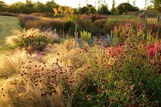 piet oudolf's garden design in west cork Prairie Planting, Prairie Garden, Meadow Garden, Garden Cottage, Dream Garden, Garden Beds, Jardim Natural, The Secret Garden, Dutch Gardens