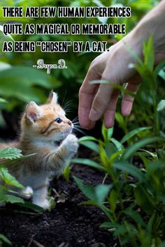 "Cute, sweet little one. ""There are few human experiences quite as magical or memorable as being 'chosen' by a cat"""
