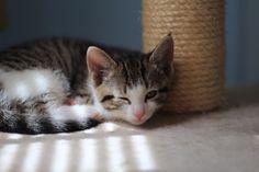 Kitten WINK ;) Foster Kittens, The Fosters, Cats, Animals, Gatos, Animales, Animaux, Animal, Cat