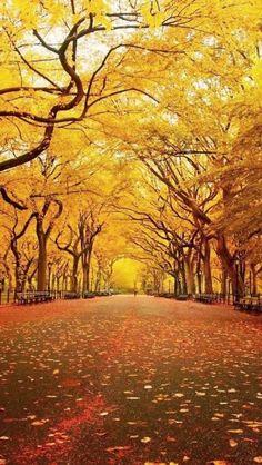 NYC Central Park in Autumn (via Kristen Fox)