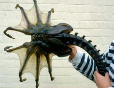Sydney feb 19 scientist filmed and captured giant sea creatures like sea spiders size of dinner plates-reuters