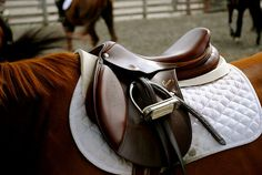 English horse saddle  me-and-my-imperfections:    Taken by Sam Kluepfel/Me