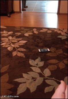 """When your Cat steals your new smartphone: """"Mine, right Meow!"""" (May be she thinks that the smartphone is a… kitten?)"""
