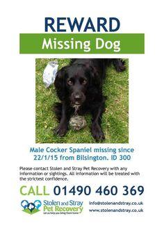 REWARD MISSING DOG SAMPSON Missing from #RomneyMarsh #Kent 21 Jan 2015 http://www.doglost.co.uk/dog-blog.php?dogId=81843#.VNjp2y7-tm0 … … #HelpFindThem