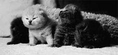 animais fofos tumblr - Pesquisa Google