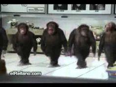 New Ideas Funny Happy Birthday Monkey Happy Birthday Monkey, Funny Happy Birthday Song, Birthday Songs, Zumba Songs, Zumba Quotes, Monkey Funny Videos, Videos Funny, Funny Gifs, Monkey Dance