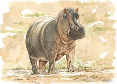 hippo watercolor painting with a twist | Hippo Watercolor Gallery
