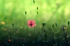 nature | alone | by PriscilaO | http://ift.tt/1orPEci