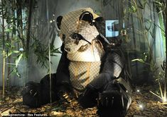 Is this the world's most stylish zoo? Creatures crafted out of Louis Vuitton handbags on display in Chinese megastore