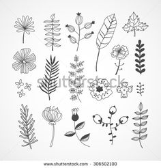 Plants, herbs, flowers in hand drawn style. Nature elements made in vector