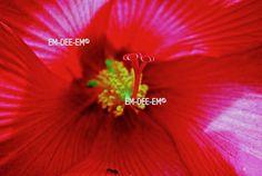 Australian Artist EM-DEE-EM Original Photograph ~ Digital Image ~ RedAnt 3021-1