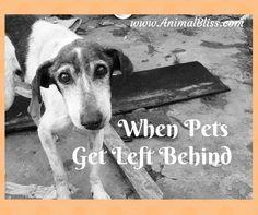 When pets get left b