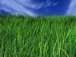 Add 2 tablespoons of Epsom salt to a gallon of water and spray your lawn for a lusher, greener lawn.