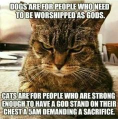 Your source for funny pet pictures and other fun animal pictures. Cute and funny cats and dog pictures are posted every day. See funny animal pictures here Funny Animal Memes, Cute Funny Animals, Funny Animal Pictures, Funny Cats, Funny Memes, Funny Cat Quotes, Funniest Animals, Funny Videos, Pet Pictures
