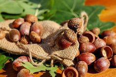3 Edible Wild Nuts You'll Find Everywhere -- But Not At The Store