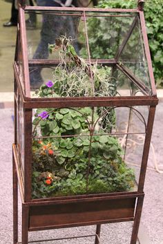 large terrarium ideas Terrariums and Wardian cases also victorian terrariums mini serre