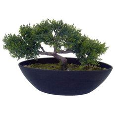 this artificial cedar bonsai tree looks great in your study or on the kitchen window sill bonsai tree office window