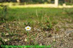 El jardín de la alegría : Pequeñas cosas verdes :)