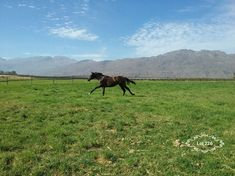 Born To Run, Horses, Mountains, Nature, Travel, Animals, Animales, Viajes, Animaux