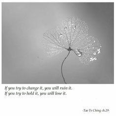 Zen Quotes, Tao Te Ching, Haiku, Good Advice, Buddhism, Beautiful Words, Spirituality, Wisdom, Atypical