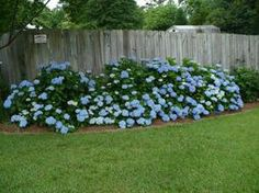How to propagate hydrangeas & other budget gardening ideas!