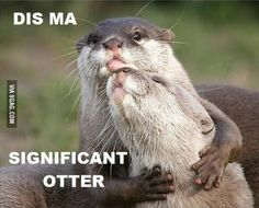 Dis ma significant otter!