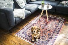 Unser neuer orientalischer Teppich im Wohnzimmer hat schon einen neuen Fan gefunden. :D