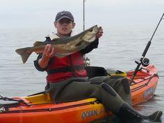 Kayak Fishing For Pollack Sea Angling, Kayak Fishing, Heroines, Kayaking, Kayaks