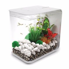 The biOrb FLOW 15 is ideal for keeping small fish or shrimps and is compact enough to place on your desk or in a small space. Does small mean unhealthy? Not at all, the biOrb Flow 15 actually has a bi