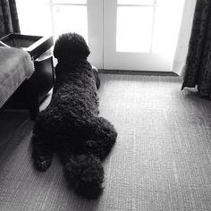 Bo waiting by Pete Souza.