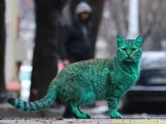 This Mystery Behind This Green Bulgarian Cat May Finally Be Solved by http://www.funnynlol.com/amazing/mystery-behind-green-bulgarian-cat-may-finally-solved