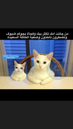 Funny Photo Memes, Cute Cat Memes, Funny Picture Jokes, Funny Cute Cats, Funny Reaction Pictures, Cute Baby Cats, Funny Pictures, Funny Study Quotes, Funny Qoutes